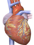 Anthracycline, Trastuzumab for Breast CA Up Heart Failure Risk