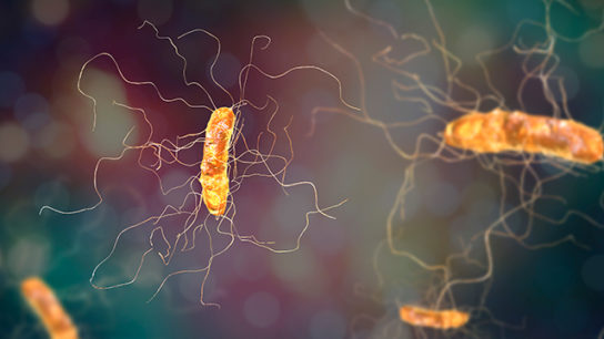 Clostridium difficile bacterium