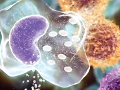 New potential therapeutic agents for myeloma are on the horizon