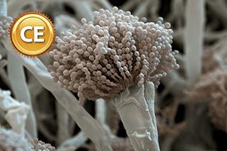 Managing Aspergillus infection in HSCT recipients