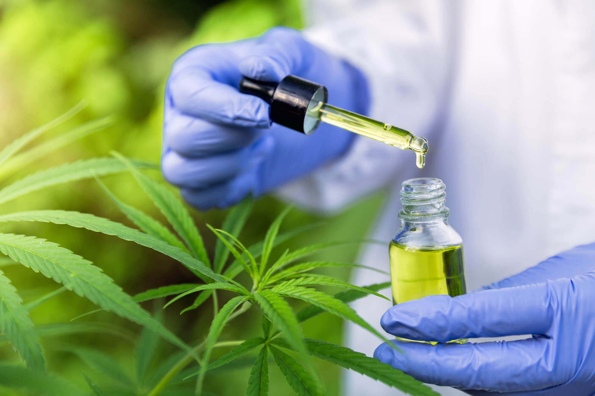 Searching for Reliable Information on CBD Oil Use in Cancer ...
